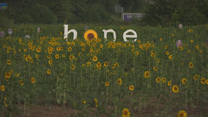 Hope sign in sunflower field